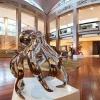 octopus sculpture, stainless steel